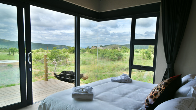 Bedroom with a bushveld view at Gweda Lodge luxury accommodation in Mabalingwe Bela-Bela